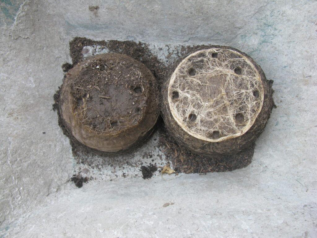 Schwache Pflanzen bilden im HerBild von zwei Pflanzen: links ungenügend durchwurzelt und daneben reich bewurzelt durch die förderung mit Floraforce